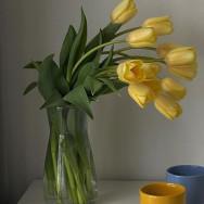 Бровист Анастасія Скрипнюк Рівне